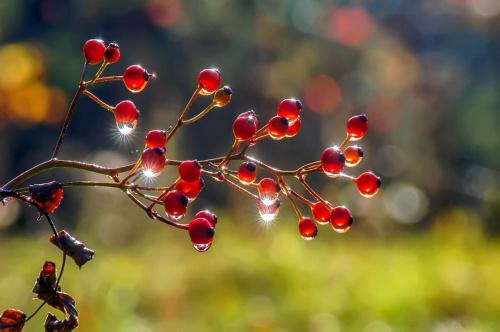 owoce leśne 2