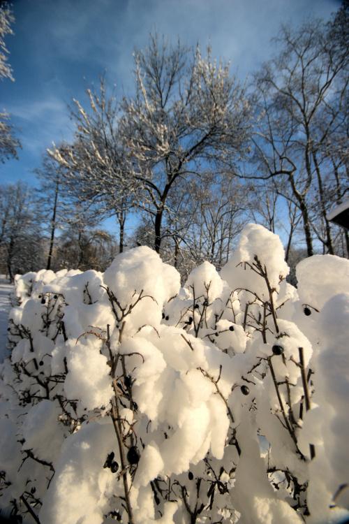 Zima w mojej okolicy