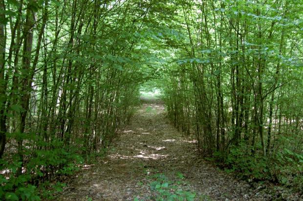 ścieżka leśna