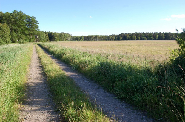 Droga przez łąkę leśną.