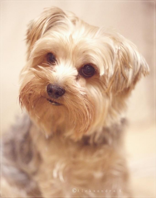 portret brudnego wąsa ;)