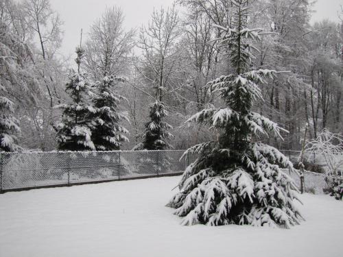Widok z okna mojej sypialni