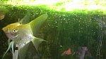 images78.fotosik.pl/418/1267f209489ec418m.jpg