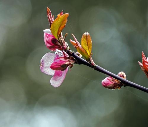 Wiosenne pozdrowienia dla wszystkich.Nie zagladam zbyt czesto teraz ale moze w koncu znajde wiecej czasu:).