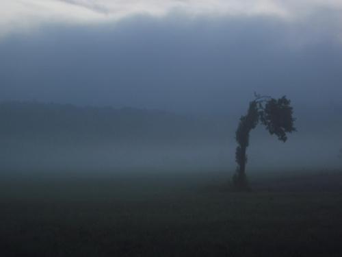 #mrok #ponure #mroczne #mgła #drzewo