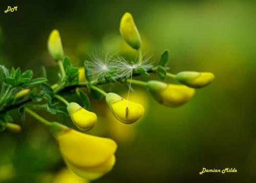 Puszek na kwiatku