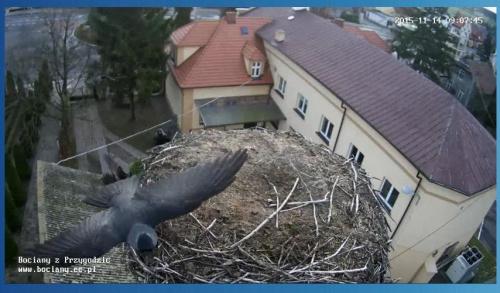 Zrzut ze strony http://www.bociany.ec.pl/