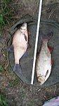 images78.fotosik.pl/800/fdbe3afe6a32eabam.jpg